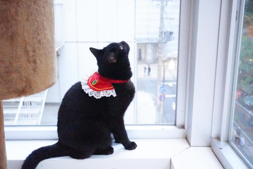 窓際の猫さん