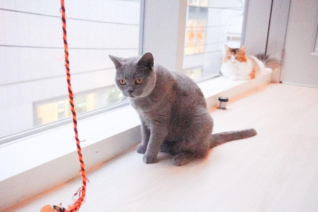 戸惑う猫さん
