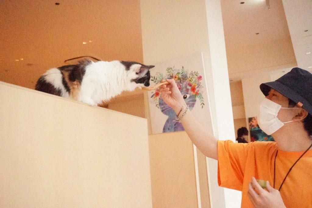 猫に餌をあげる旦那さん