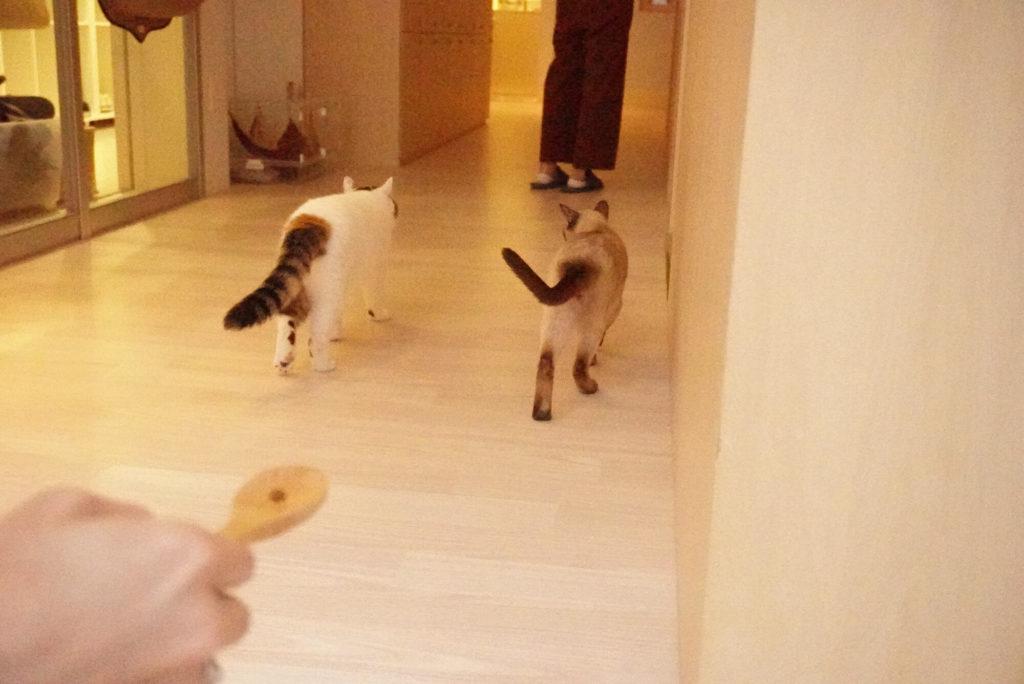 餌になびかない猫