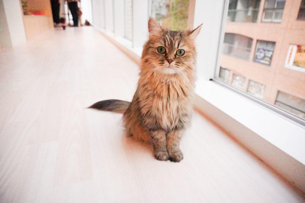 まっすぐ見つめる猫さん
