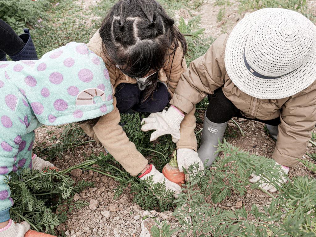 野菜を収穫する子供たち